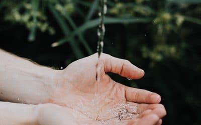 Making Bush Soap